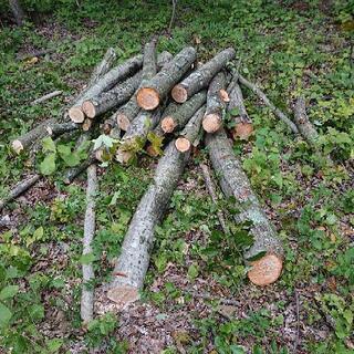 広葉樹玉切り 長さ120センチ