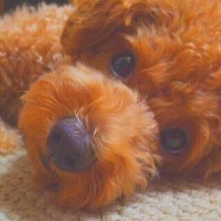 ペットシッターSS(サービスステーション)大和 Honey-PET