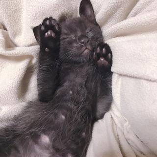 里親募集⭐︎黒猫⭐︎男の子⭐︎生後4週間