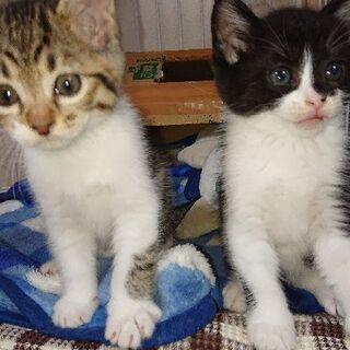 里親募集 子猫2匹