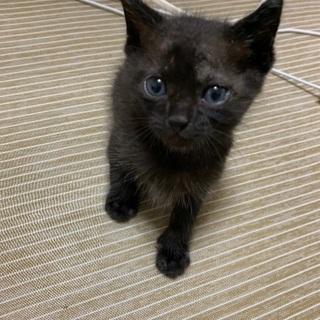 生後1ヶ月半ほどの子猫
