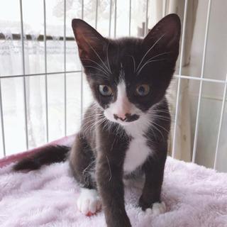 生後3ヶ月 黒白猫 オス