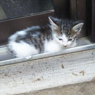 育児放棄された子猫たち