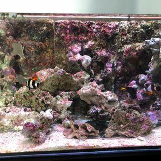 海水魚 バックスクリーン3点と オーバーフローカバー  交渉可能