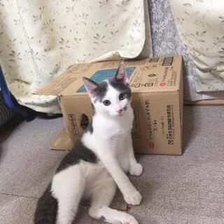 兄弟猫です