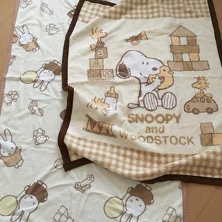10月中に!日本製綿毛布