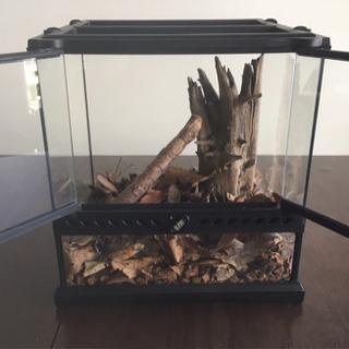 エキゾテラ/昆虫・爬虫類飼育 水槽
