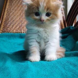 ⭐ワンちゃん猫ちゃんのお世話⭐