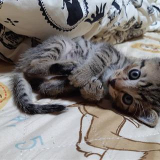 子猫ちゃん里親募集