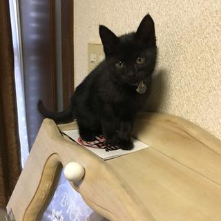 黒猫ちゃん1ヶ月半?