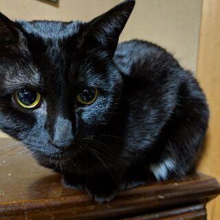 黒猫 オス 3才