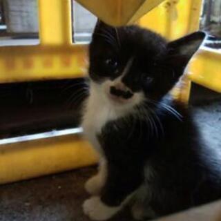 勤務先の会社の置き場で母猫が仔猫を5匹を生んでしまいました 生後...