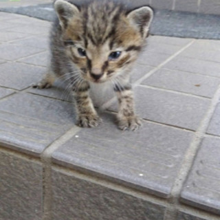 生後2週間の子猫ちゃんを助けて下さい。