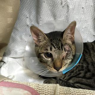 猫が大好き 片目のあけぼのくん 4~5ヶ月