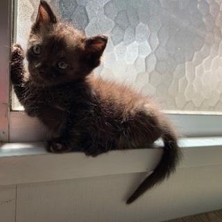 縞模様の子猫
