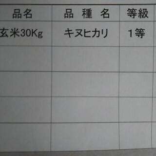 最高品質1等米!減農薬キヌヒカリ新米10キロ~ - 加古郡
