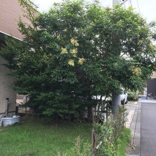 樹木の剪定、造園作業、栃木県、茨城県