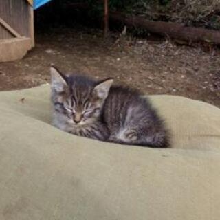 【募集終了】畑の野良の子猫