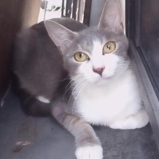 信頼度№1.猫がオーナーの「お見合い会」(イリス)菜々緒さん似の超美猫