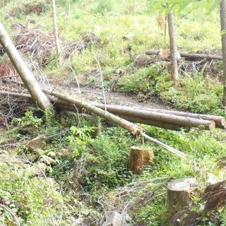 無料 山林伐採後の残った木材差し上げます。