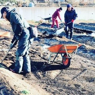 自然薯(山芋)の収穫と苗植え作業  募集