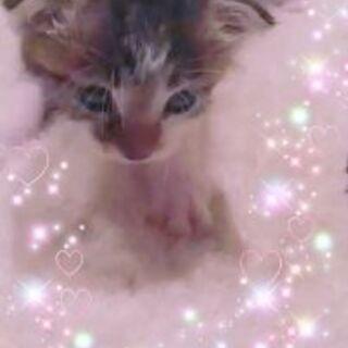 正式譲渡♥地域猫レスキュー♥しし丸