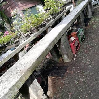 コンクリの植木台