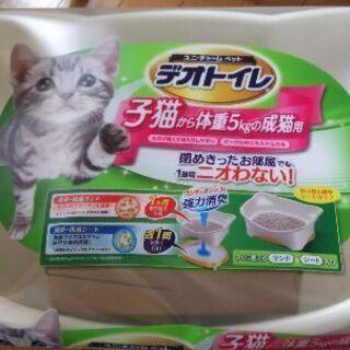 デオトイレ子猫