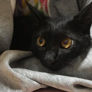 虐待あり 甘えた黒猫♂7か月(エイズ陽性)の里親さんを探しています。