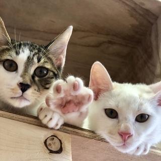 10月27日 猫の譲渡会 約40匹のネコが待ってます!