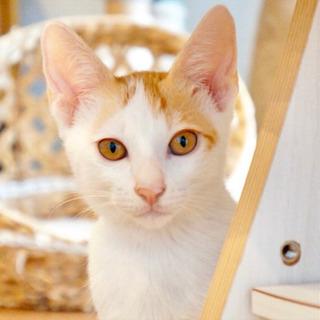 *子猫20匹以上〜譲渡会*一時預かりボランティアさん募集説明会 - 大阪市