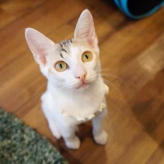*子猫20匹以上〜譲渡会*一時預かりボランティアさん募集説明会の画像