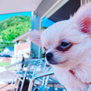 愛犬とランチ