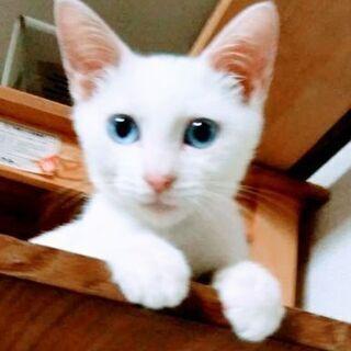 目がアクアマリンの甘えん坊さん3ヶ月男の子