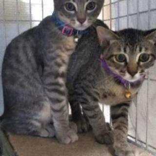 トライアル中❗️飼い猫にしてください!4ヶ月くらいの子猫