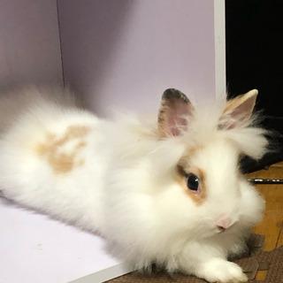 子ウサギ里親募集②昨日、里親決定しました。