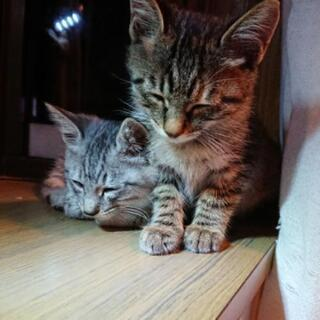 【決定】子猫の家族になってください!