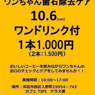 ワンちゃんお試し歯石除去ケア(10/6)
