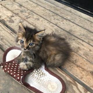 モコモコで可愛い子猫3匹