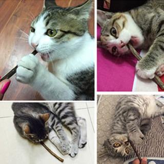 20本 猫用 歯ぎしり棒 純天然マタタビ 噛む おもちゃ またたびの木 歯クリーニングスティック ストレス解消 肥満解消 - 高知市