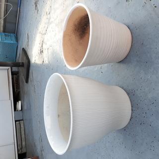 白い陶器の植木鉢8つ 差し上げます。