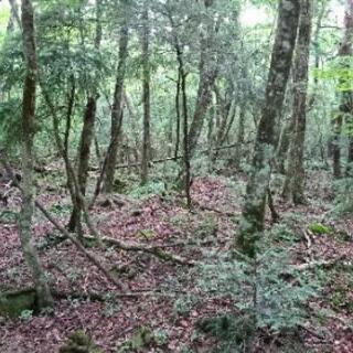 安達太良山に登りたい!