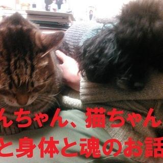 <10月23日>わんちゃん、猫ちゃんの心と身体と魂のお話会