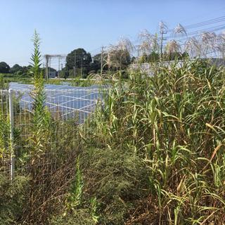 茨城県つくば市 14日〜草刈りバイト15名募集 草刈り経験者等