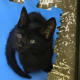 生後2〜3ヶ月くらいの黒子猫