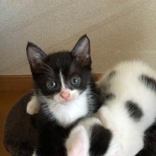 超可愛い兄弟猫です❣️ − 福岡県