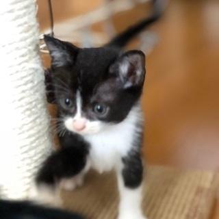 超可愛い兄弟猫です❣️ - 猫