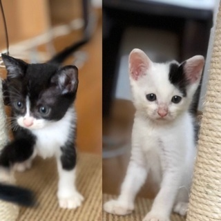 超可愛い兄弟猫です❣️の画像