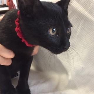 黒猫女の子、3ヶ月ほど、5匹