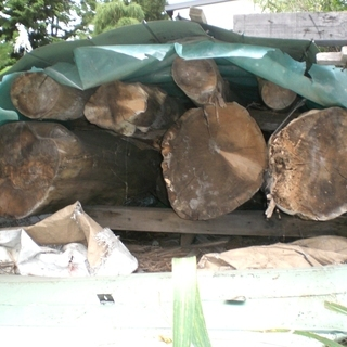 木材、ヒバ丸太